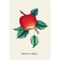 Baldwin Apple - Fine Art