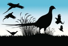 Silhouette Of A Pheasant Bird Clip Art, Vector Images ...