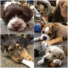 Need a dose of cuteness? Our puppy students should do the trick! #puppies #nyc #newyork #dogtraining