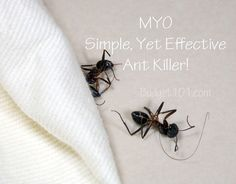 Various Make Your Own (MYO) Pest Repellents, Pesticides and More