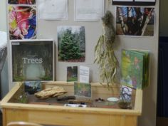 Early Kindergarten children spent the year developing their relationship with Hoyt Arboretum