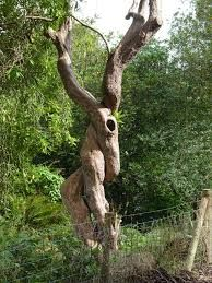 Image result for odd trees of nature