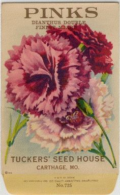 Vintage Flower Seed Packet Tuckers Seed House Lithograph PINKS (Carthage, Missouri)