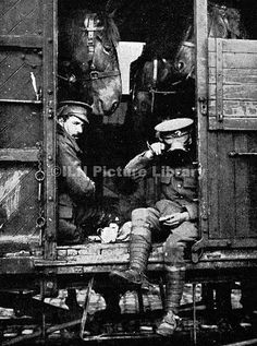 British soldiers from the British Expeditionary Force sharing a railway carriage, and a meal, with some horses, on their way to the front in August 1914, shortly after the outbreak of World War I.