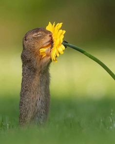 animal pictures This Photographer Took Pictures of a Squirrel Smelling Flowers and, Welp, Now I Love Squirrels Cute Creatures, Beautiful Creatures, Animals Beautiful, Most Beautiful Flowers, Beautiful Life, Cute Little Animals, Cute Funny Animals, Nature Animals, Animals And Pets