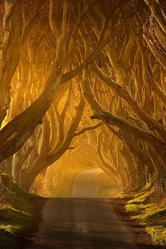 RPA inspires me to take the path less traveled, to step out of my comfort zone, and to try something new. So far, I've been loving every second of this path.   (The Dark Hedges by Klarens)