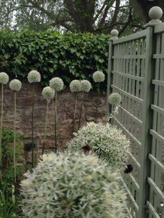White alliums echoing the trellis finials #Goose Green Design