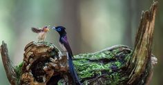 Kuşlar ve yavruları
