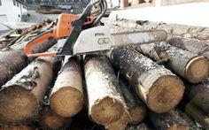 Politistii au descins, miercuri dimineata, la mai multe adrese din Suceava, fiind vizati administratori de firme si angajati ai unor ocoale silvice suspectati de taieri ilegale de arbori.