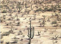 Donde la estación es más cálida, la sabana es sustituida por la estepa. Los seres vivos que habitan en esta zona han tenido que adaptarse a ...