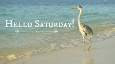 8.5.17 Hello Saturday, Happy Saturday, Days Of Week, Months In A Year, Saturday Morning Quotes, North Carolina Beaches, Ocean Shores, East Coast, Good Morning