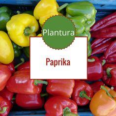 die besten 25 paprika pflanzen ideen auf pinterest paprikapflanze paprika anpflanzen und. Black Bedroom Furniture Sets. Home Design Ideas