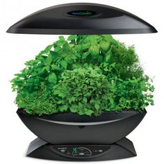 Miracle-Gro AeroGarden Indoor Garden with Gourmet Herb Seed Kit, White Growing Tomatoes Indoors, Herbs Indoors, Growing Herbs, Grow Tomatoes, Hydroponic Gardening, Hydroponics, Indoor Gardening, Urban Gardening, Lawn And Garden