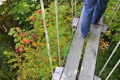 Fall View From Sky Bridge At Navitat Canopy Adventures