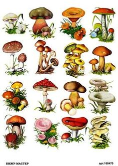 mushrooms for decoupage Botanical Drawings, Botanical Illustration, Botanical Prints, Mushroom Drawing, Mushroom Art, Mushroom Crafts, Wild Mushrooms, Stuffed Mushrooms, Art Picasso