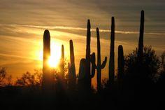 Cactus Sunset Cool Wallpaper
