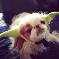 This Yoda Dog Costume Gives the Illusion of Jedi Mastery #petcosplay trendhunter.com