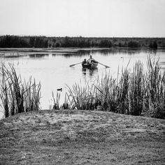 Boat ride . #alexancuphotography #lake #boat #water #paddles #wooden #duck #wildlife #outdoors #comana #romania #reeds #vegetation #shore #grass #bnw #blackandwhite #monochrome #nature #ride #photoeveryday #photooftheday #summer #fun #activity Paddles, Romania, Summer Fun, Monochrome, Grass, Wildlife, Boat, Outdoors, Activities