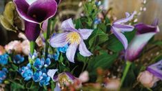 Blühendes Leben - Die Floristinnen der Blütenwerkstatt leben ihren Beruf als blühende Berufung Plants, Language Of Flowers, Natural Materials, Workshop, Art Pieces, Life, Lawn And Garden, Flora