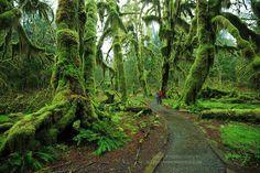 Hall of Mosses Trail, Olympic National Park, Washington