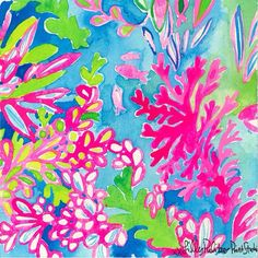 Lilly 5x5