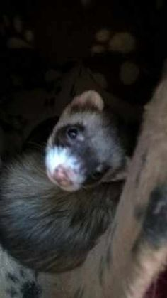 January 28, South Yorkshire, Animal Control, Ferrets, Find Pets, Lost & Found, Livestock, Guinea Pigs, Cute Cartoon
