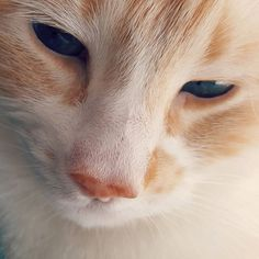 Florence Mercier St-P. St P, Blue Eyes, Cats Of Instagram, Photo And Video, Animals, World Animals, Animales, Animaux, Animal