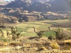Terrace fields in Colca Valley Peru