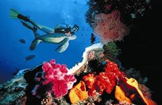 Great Barrier Reef and Rainforest - Qantas Vacations. From $1,889  www.aussieexperiences.com