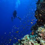 The Dazzling Elphinstone Reef of Egypt