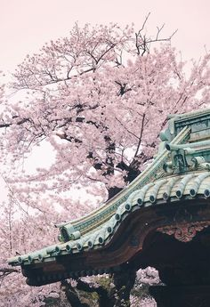 """twitter-and-twine: """" Bucket List: Visit Japan for the spring cherry blossom season """""""