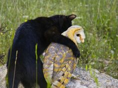 Unlikely Animal Friends - Fum the house cat is hugging his best friend Gebra the barn owl.