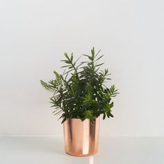 Our eclectic and bohemian style range focuses on the unique and shucks the ordinary. Browse the Oh What's This range of home furniture, decor and accessories. Copper Planters, Copper Pots, Planter Pots, Painted Floorboards, Copper Interior, Copper Bathroom, Flower Fashion, Home Decor Furniture, Interior Styling
