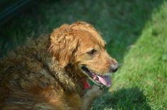 Dog led the way to missing 5-year-old autistic boy | StarTribune.com