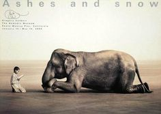Collectable Print: Boy Reading with Elephant by Gregory Colbert : 36x51in