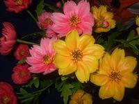 ผลิต ดอกไม้ดิน,ดอกไม้ประดิษฐ์,ดินญี่ปุ่น,ดินไทย ,อุปกรณ์ดอกไม้,โมเดลอาหาร
