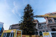 30.000 luci led a basso consumo energetico e 1.000 fiocchi gialli vestiranno l'albero di Natale di 30 metri che DHL Express ha donato alla città di Milano.