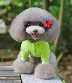 Affordable Dog Grooming Near Me Dog Grooming Styles, Pet Grooming, Animals And Pets, Baby Animals, Cute Animals, Cute Puppies, Dogs And Puppies, Fru Fru, Mundo Animal