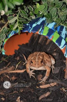 How to Make a Flowerpot Toad House