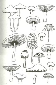 mushroom coloring page for adults zeichnung Doodle Drawings, Easy Drawings, Doodle Art, Mushroom Drawing, Mushroom Art, Nature Journal, Adult Coloring Pages, Art Inspo, Painting & Drawing