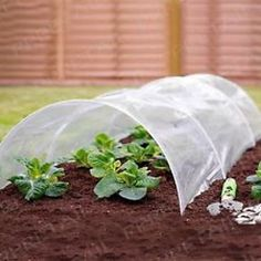 Mini Greenhouse Gardening Protective Poly Tunnel Fast Grow 1.5m in Garden &…