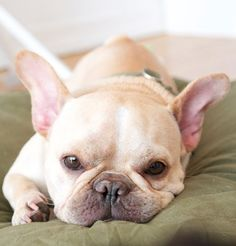 Just Us Gals - True Confession: French Bulldogs