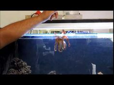 Squirting Octopus - YouTube Octopus Illustration, Nature, Youtube, Naturaleza, Nature Illustration, Off Grid, Youtubers, Youtube Movies, Natural