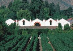 A, Winery in Curico: Vineyard Guide propose a selection of Vineyards and Wines in Aconcagua - Wine Producer from Aconcagua Curico - Page 1 Chilean Wine, Hidden Places, In Vino Veritas, Walkabout, Wineries, South America, Places Ive Been, Beautiful Homes, Seafood