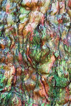 Colourful textured bark on a rainforest tree, Royal National Park, Australia
