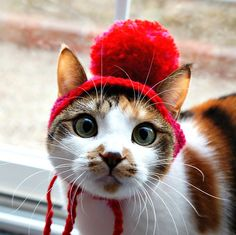 cats in hats | Tumblr