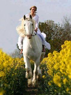 👑 BEAUTIFUL HORSES 🐎 – Społeczność – Google+
