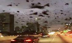 El pasado 20 de Enero, miles de aves negras se precipitaron sobre una autopista en Houston, semb...
