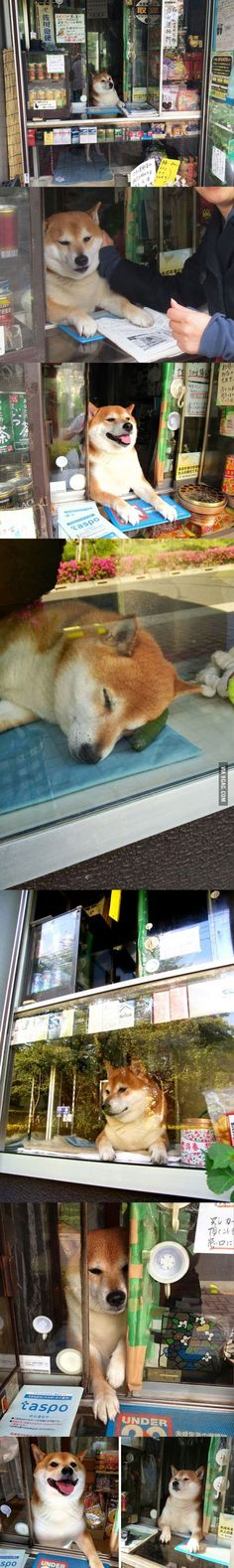 This doge works at a cigarette stand in Japan