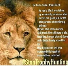 r.i.p Cecil SIGN & SHARE demand justice! http://www.care2.com/causes/demand-justice-for-cecil-the-lions-killer.html